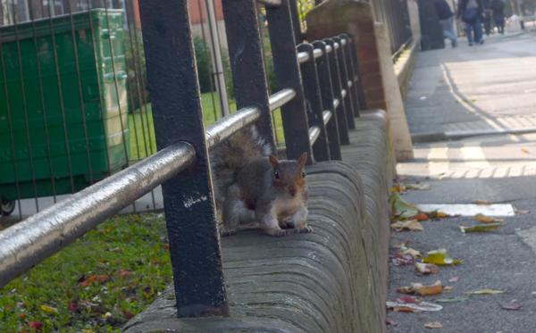 urbansquirrel