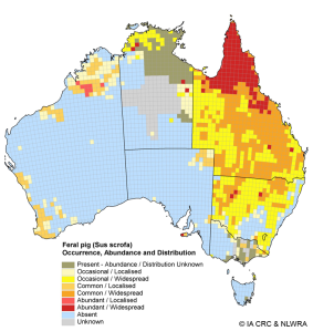 Map shows the occurrence, abundance and distribution of the feral pig (Sus scrofa) in Australia, 2006/07. Originally published in: West, P. (2008). Assessing Invasive Animals in Australia 2008. National Land & Water Resources Audit and Invasive Animals CRC, Canberra. (See web link below to access full report).