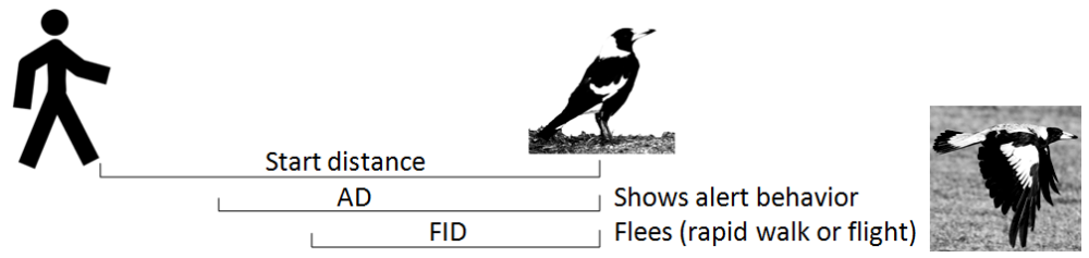 Alert distance (AD) is measured as the distance between the animal and the approaching human at which the animal first becomes aware of the person's approach. Flight Initiation Distance (FID) is the distance at which the animal moves away when approached.