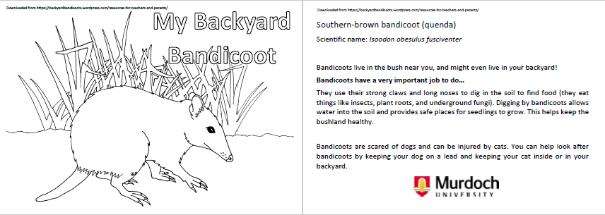 picture-bandicoot-colouring-in