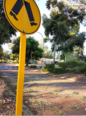 "Watch your step! A campus roadway covered in cockatoo ""droppings""."